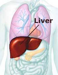 Liver Alcohol Drugs Cirrhosis Healthy